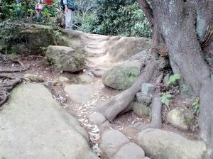 木の根を越えてスロープを越えて